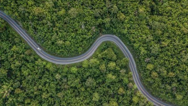 Estrada em meio a floresta