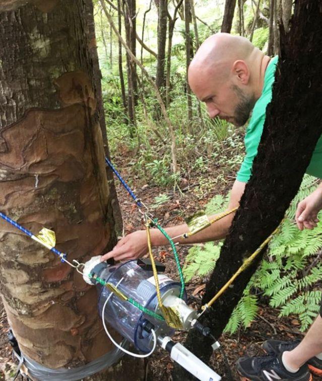 Martin Bader midiendo el flujo de agua en uno de los árboles vecinos al tocón
