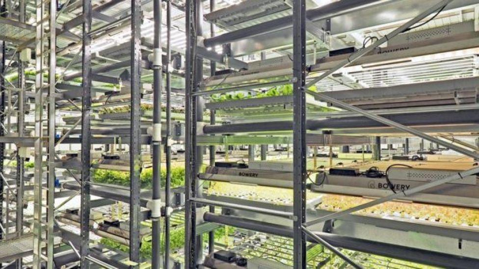 Bowery Farming trays under light