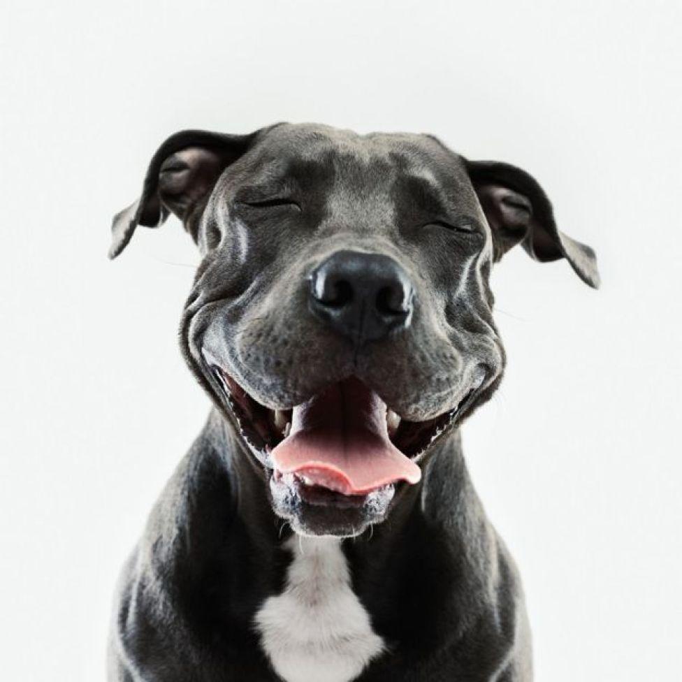 Un perro blanco y negro sonriendo.
