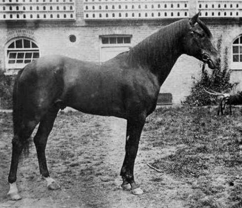 الحصان قارس