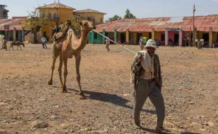 رجل يقتاد بعيرا في المنطقة المسلمة من أسكوم