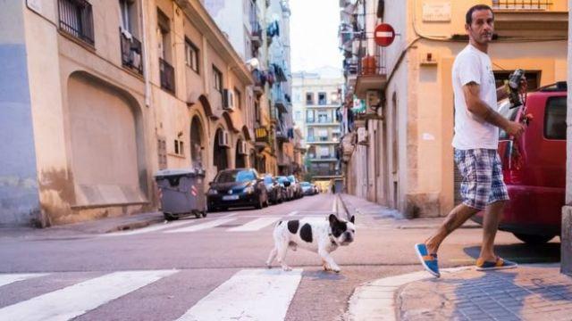 Homem cruza a rua com cachorro