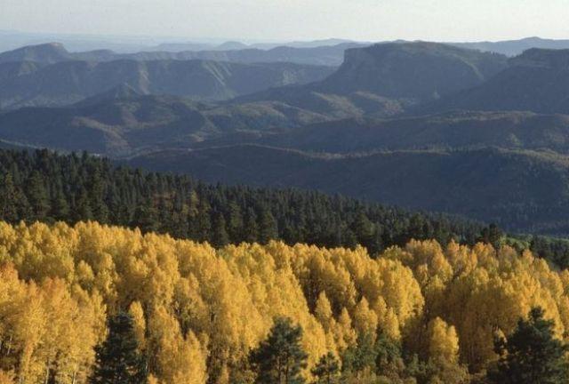 Floresta na montanha durante o outono