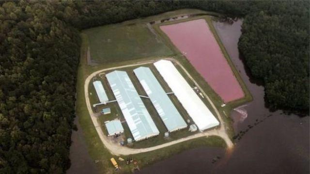 Fazenda de porcos na Carolina do Norte