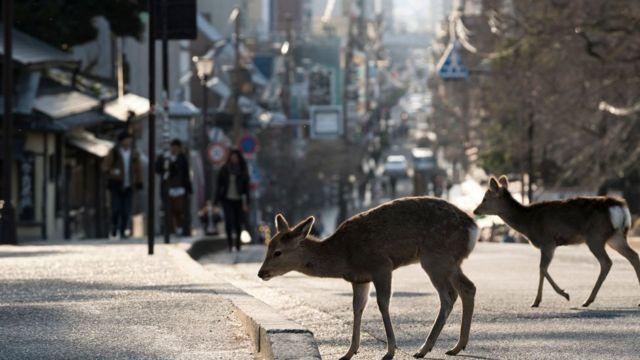 Ciervos en las calles de Nara, Japón.