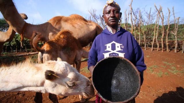 الإبل تعد من الممتلكات القيمة في مارسابيت، ويخالط البشر في مختلف أنحاء العالم هذه الحيوانات