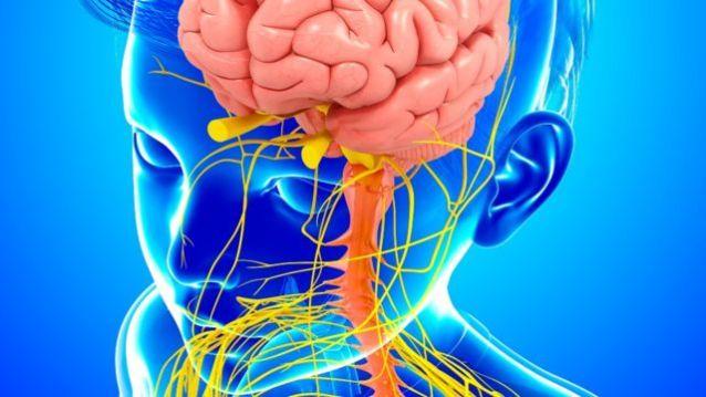 Ilustração do sistema nervoso de uma criança