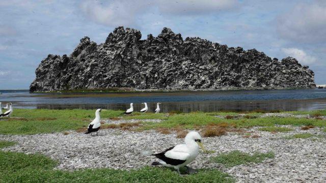Imagen de la roca volcánica de la Isla de Clipperton. Foto tomada en 2016 por el investigador Enrique Ballesteros.