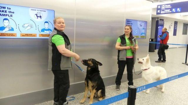 Instructores con perros rastreadores Valo (izquierda) y E.T. en el aeropuerto de Helsinki. Foto: septiembre de 2020
