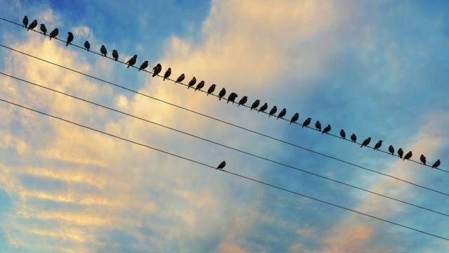 Pássaros em cabos elétricos - eles estão todos no mesmo cabo, exceto para aquele que está sozinho no cabo paralelo