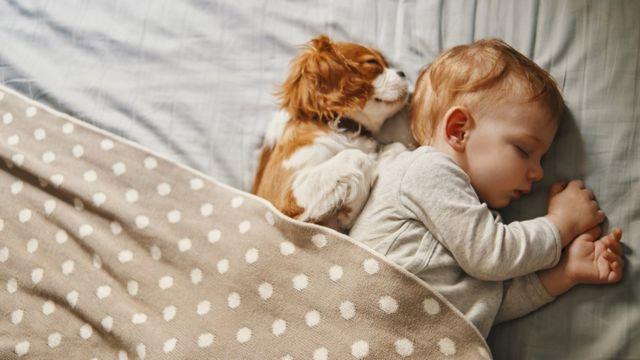 Bébé dort paisiblement, avec un chien endormi à côté de lui.