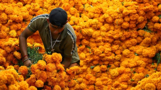 A man with a large mountain of marigold flowers.