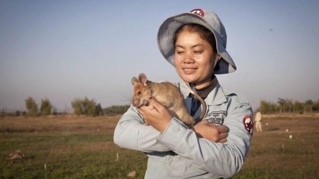 Malin carrying the rat Magawa