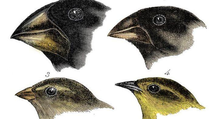 Espécies de pássaros observadas por Dawin em Galápagos
