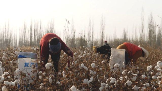 新疆採棉工:新證據揭露時尚產業背後的強迫勞動 - BBC News 中文