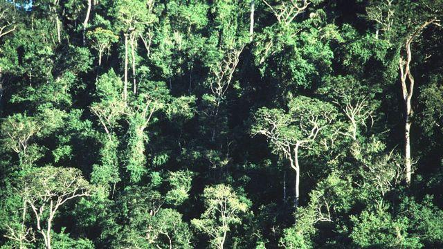 브라질 대서양 숲