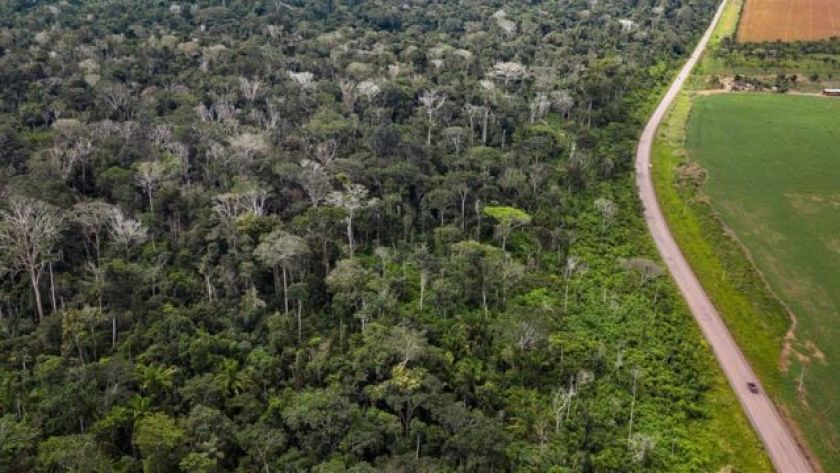 Amazon forest burning along BR 163 in Pará shows large numbers of dead trees (ie, those without leaves) as a result of fires