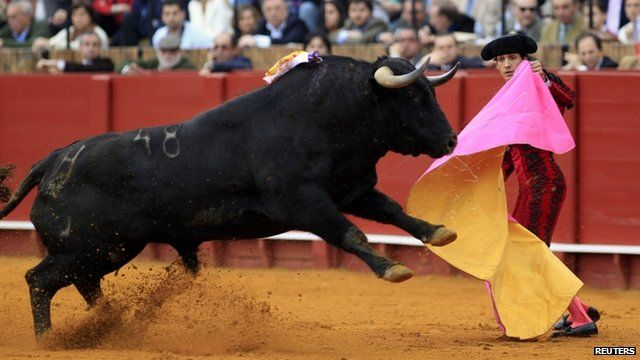 Spain Moves To Protect Bullfighting Tradition BBC News