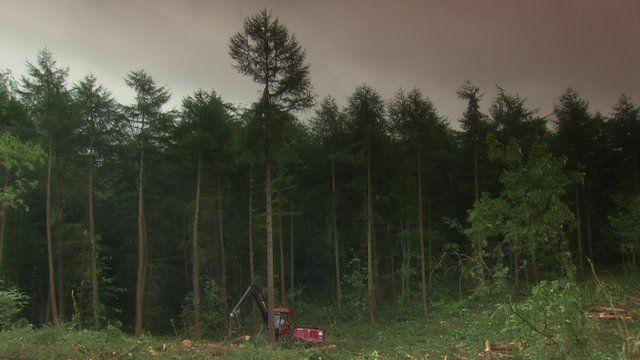 tree felling is under
