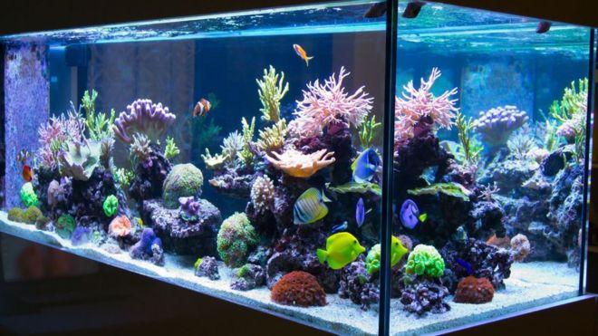 aquarium owner warns over