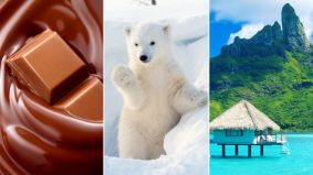 Chocolate, a polar bear and a South Pacific island