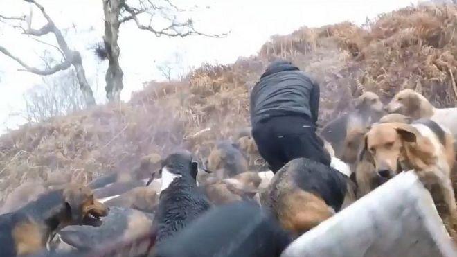 Hunt Hunt Saboteurs with hounds