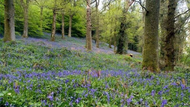 ancient woodland losses not