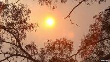 Sun shining down on the Australian bush