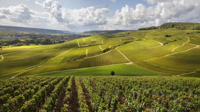 Región de Champagne en Francia