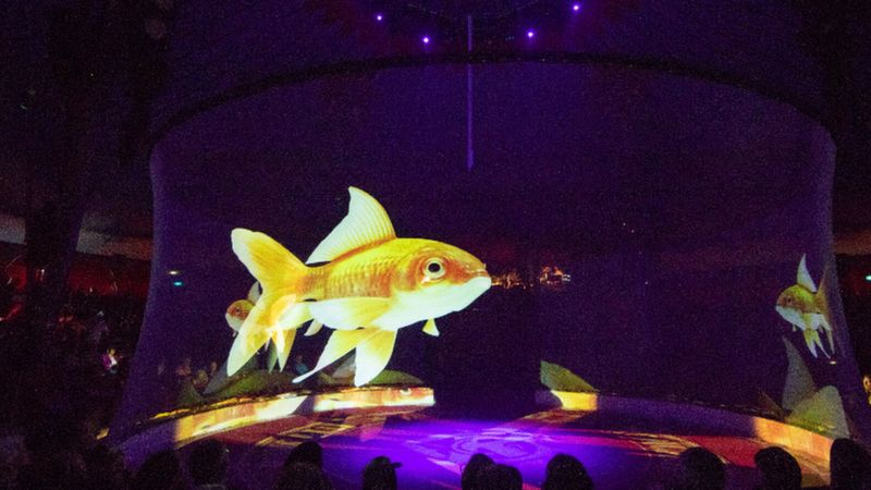 Hologram fish in the circus