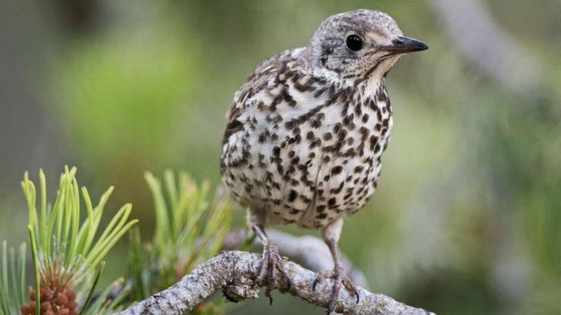 Glue bird traps: Macron suspends use amid EU row