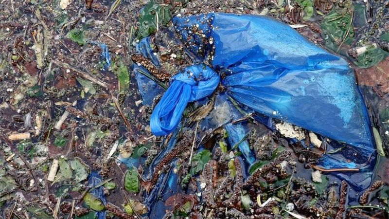 A blue plastic bag in Regent's Canal in London