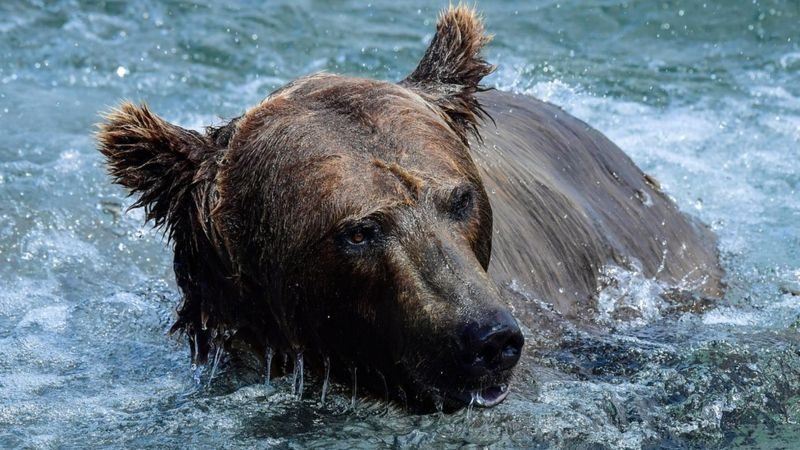 Petition: Mother Bear and Cub Shot by Russian Navy
