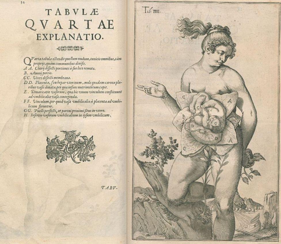 """Ilustración de """"De formato foetu liber singularis"""""""