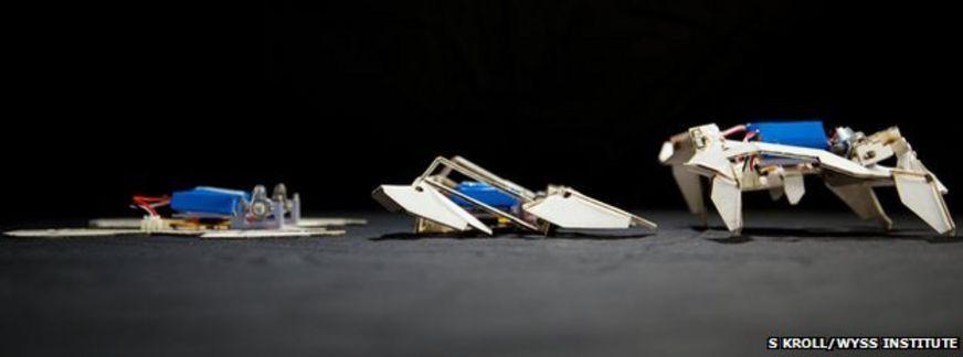 Origami robots (c)