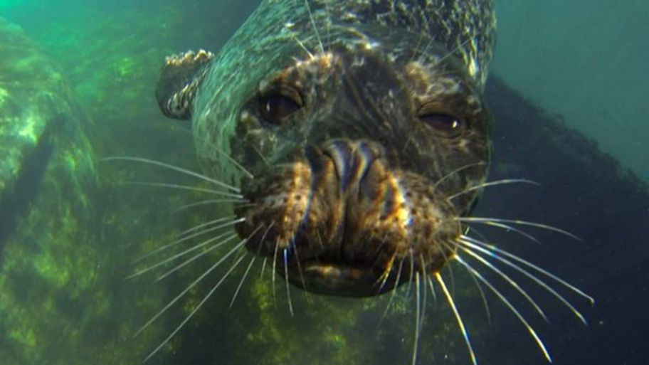 mystery solved how seals