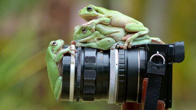 Fotografías del mundo silvestre de Muhammad Roem