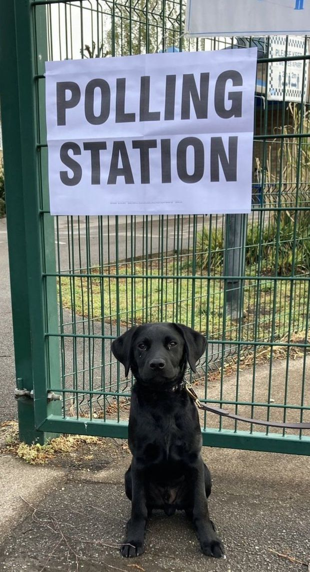 A puppy stands in front of a polling station sign in London