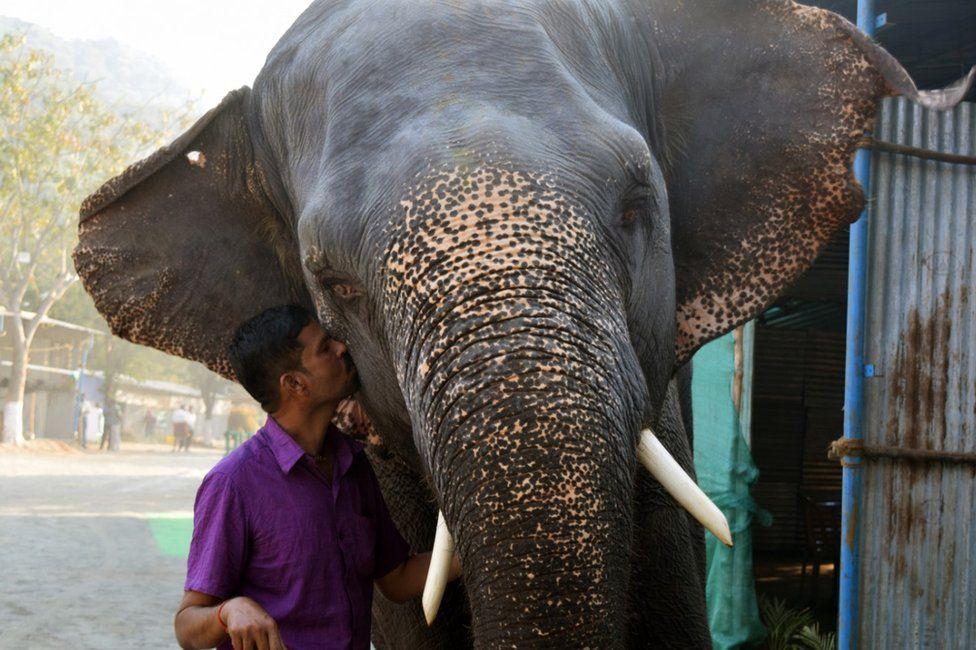 A Holiday Camp For India S Captive Elephants Bbc News