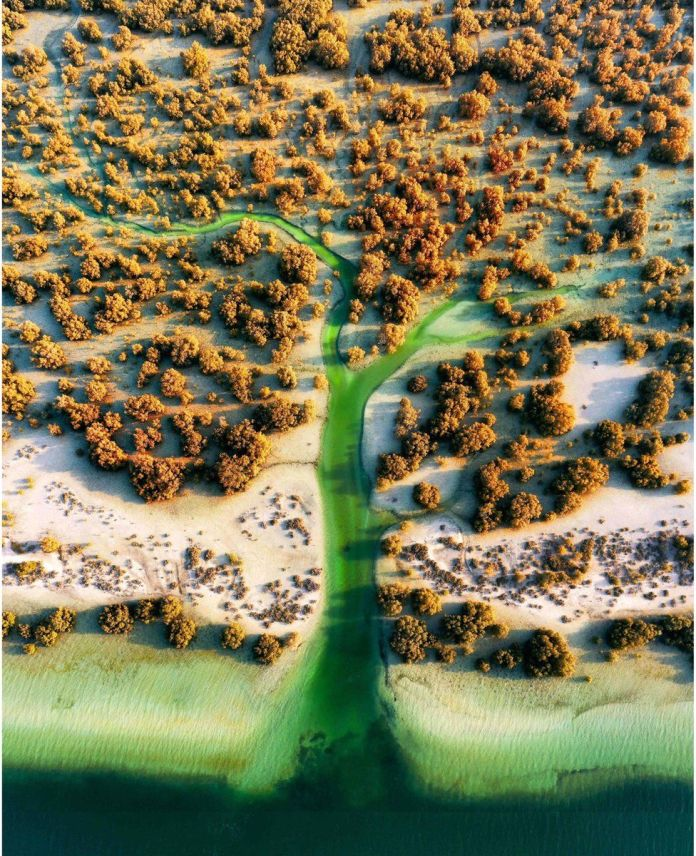 An aerial view of mangrove trees and a coastline in Abu Dhabi