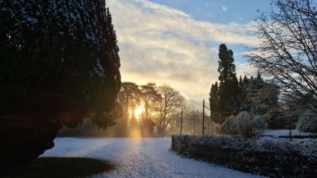 Snowy garden in Heath, Cardiff