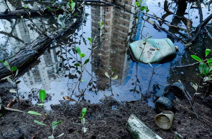 A high rise building is seen reflected in a puddle in an area of mangrove saplings in Brazil