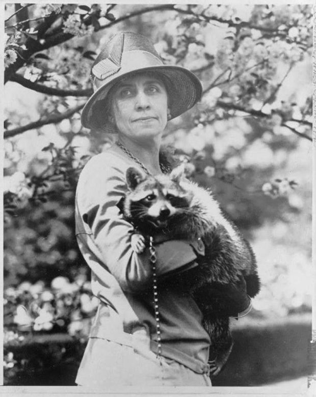 First Lady Grace Coolidge holds a raccoon on a leash
