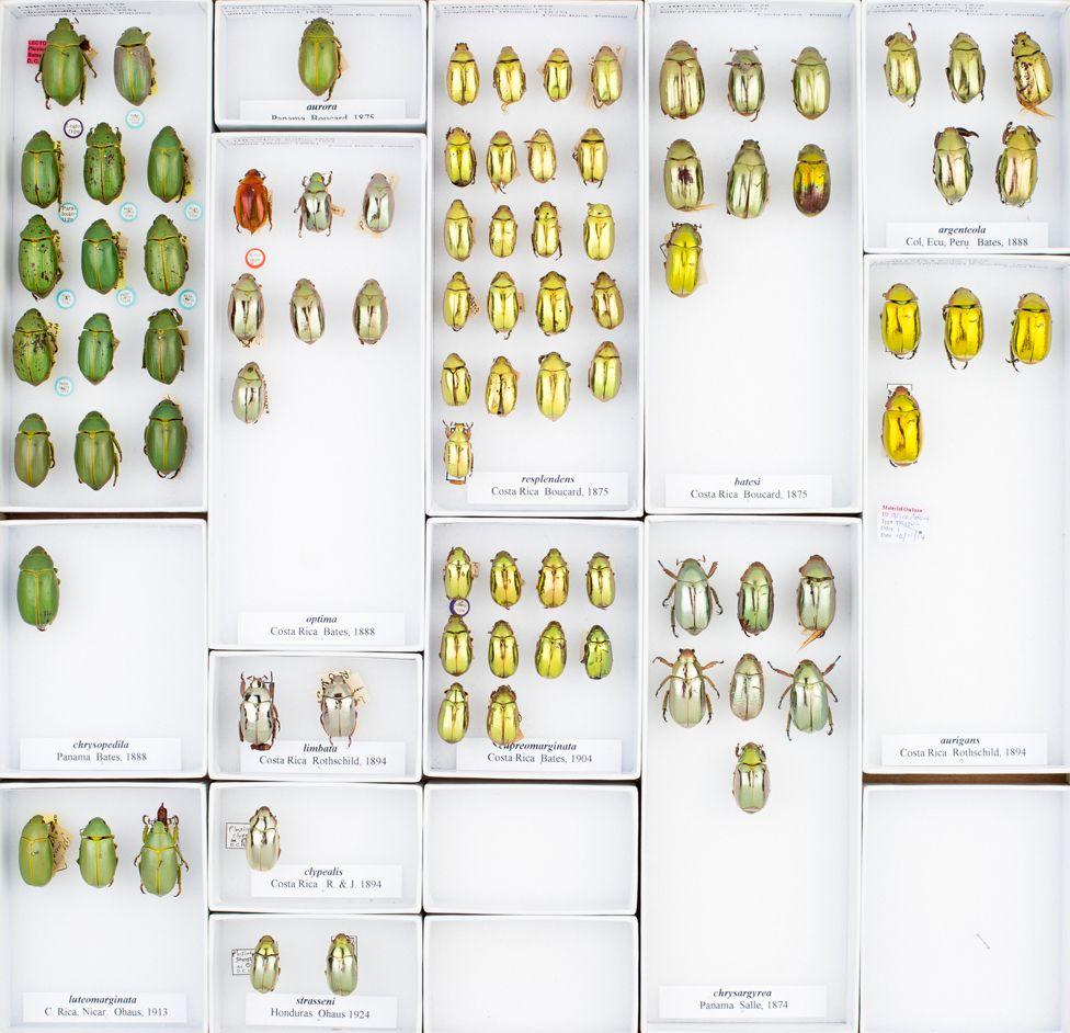 Jewel beetles tray © Trustees of NHM, London