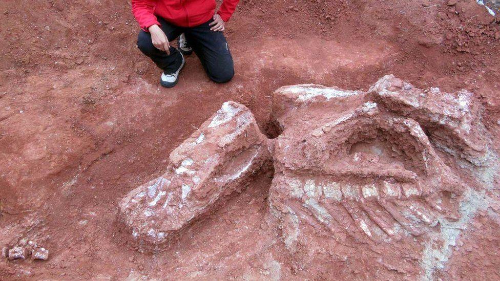 The dinosaur measured 8-10 metres