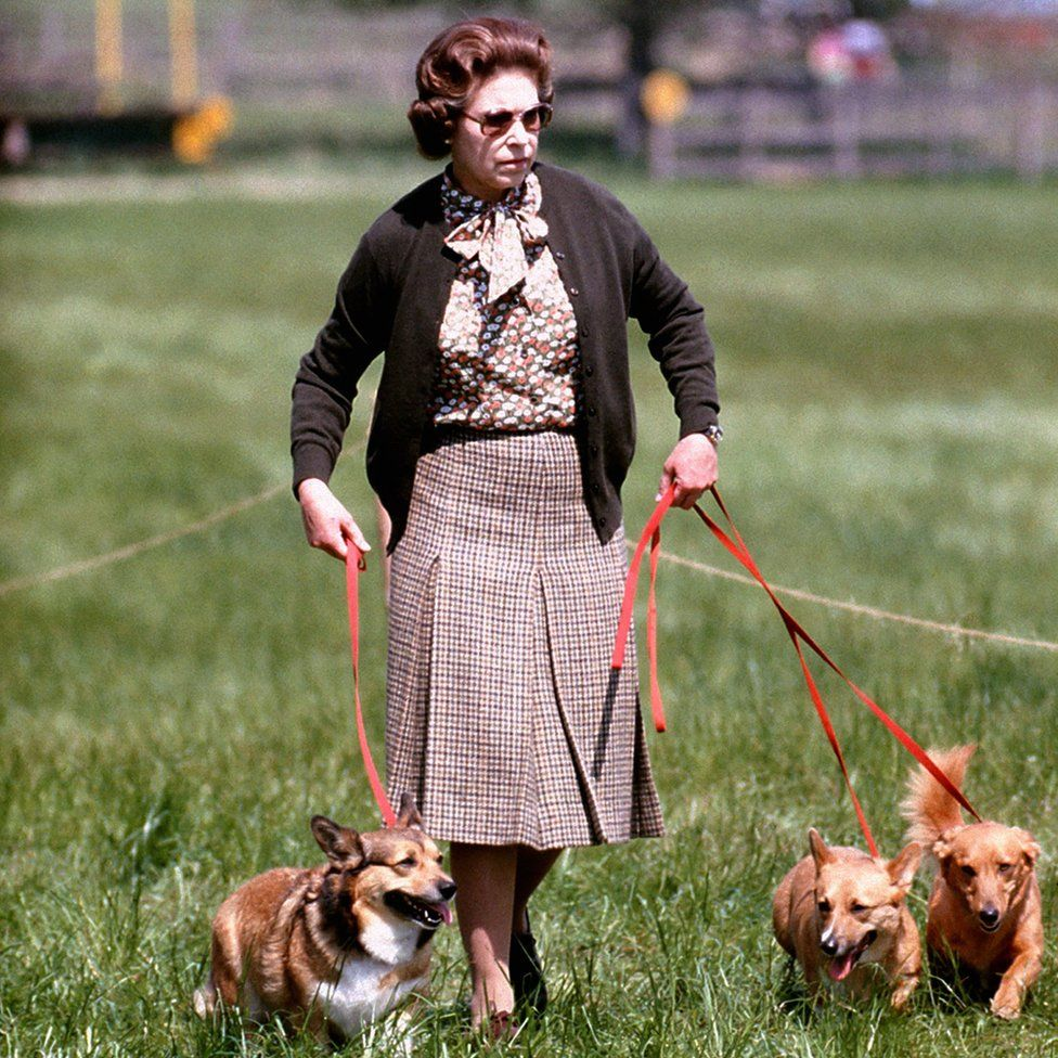 Queen Elizabeth II with some of her corgis