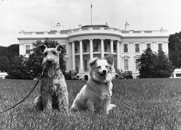 Two dogs pose outside the White House