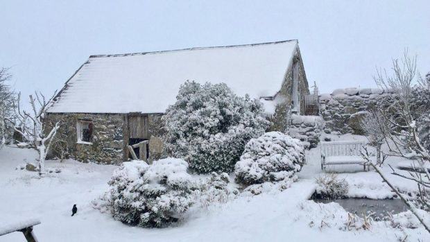 Snow-covered building and garden