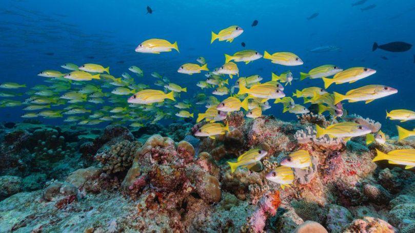Coral reef (c) SPL